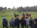 2 a morgensamling med hestecroquis