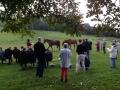 2. morgensamling med hestecroquis